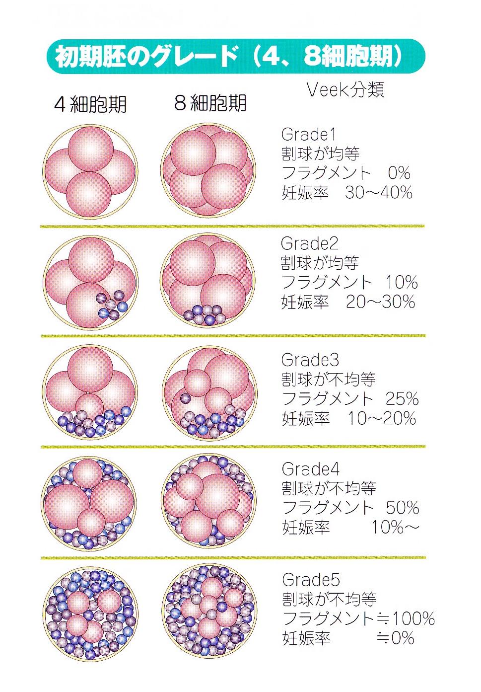 グレード 胚 移植